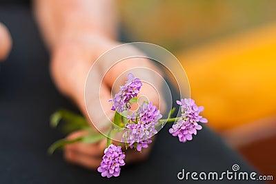 Violet flowers in elderly hands