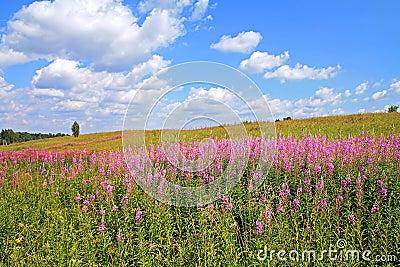Violet flowerses