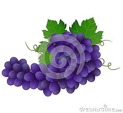 Violet grape