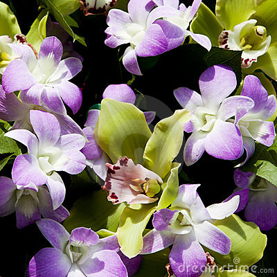 Violet and green orchids