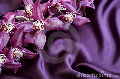 Violet Silk and Orchids
