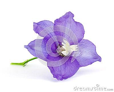 Violet vlower