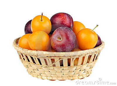 Violet and yellow plum
