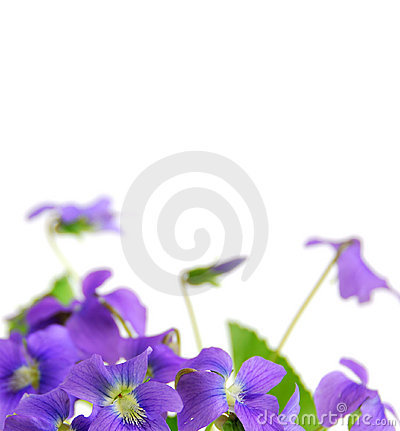 Free Violets Royalty Free Stock Image - 2182176