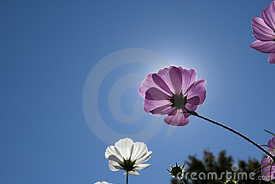 Violett wildflower against blue sky