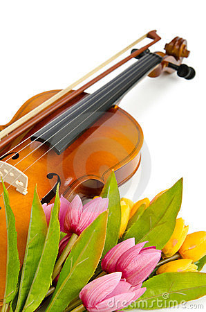 Violin and tulip flowers