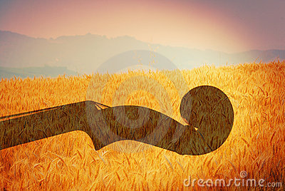 Violin and wheat field