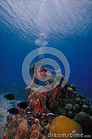 Free VIrgin Islands Caribbean Scuba Girl 2 Royalty Free Stock Images - 10314989