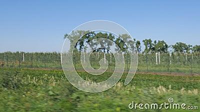 Visão geral das árvores e campos em movimento com borrão para fundo filme