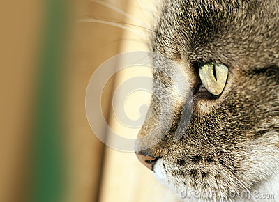 Visage De Chat Photo libre de droits - Image: 28052755