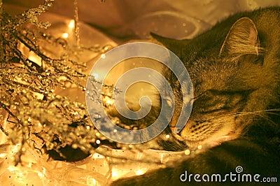Visions of sugar mice?