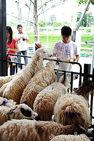 Visiting rural farmland Editorial Image