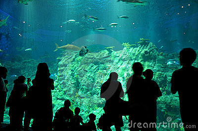 Visitors and aquarium