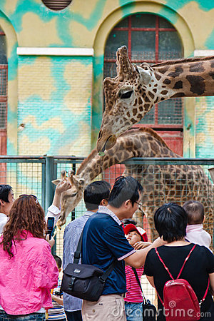 Visitors touching the grraffe in the zoo Editorial Image