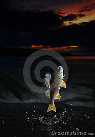 Vissen die uit springen