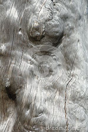 Visset träd - bakgrund