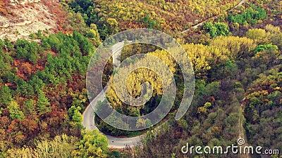 Vista aérea da floresta do outono no dia ensolarado vídeos de arquivo