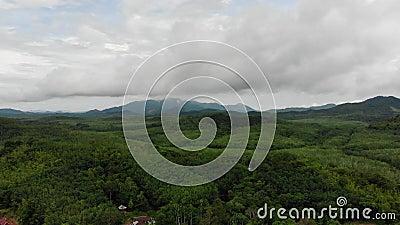 Vista a?rea da selva verde da floresta ?mida em ?sia vídeos de arquivo