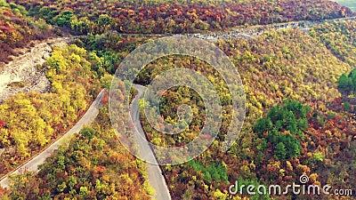 Vista aérea de queda de floresta no dia ensolarado video estoque