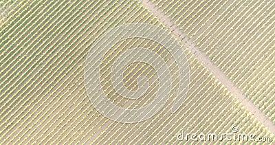 Vista aérea de un viñedo almacen de metraje de vídeo