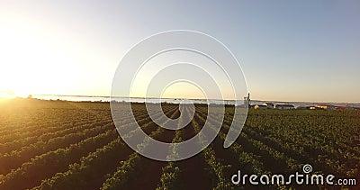 Vista aérea de un viñedo durante salida del sol metrajes