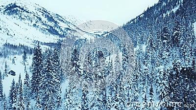 Vista aérea de vuelo de drones sobre abeto y pinar cubierto de nieve Tiempo de invierno, hermosas montañas, naturaleza salvaje metrajes