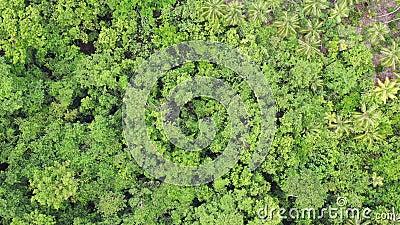 Vista aérea do dossel da floresta úmida em Papuásia-Nova Guiné filme