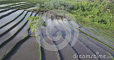 Vista aérea dos campos de arroz no dia ensolarado filme