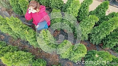 Vista aérea - Uma jovem florista está conversando com um comprador no telefone Comércio a retalho de mudas de árvores Jovem propr filme
