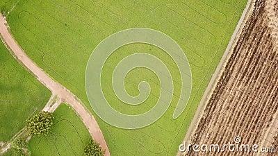 Vista aerea dalla curva del fuco delle risaie verdi stock footage
