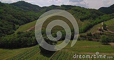 Vista aerea della vigna con le montagne nel fondo in molla in anticipo archivi video