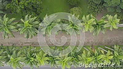 Vista aerea delle palme nel giardino botanico di Rio de Janeiro archivi video