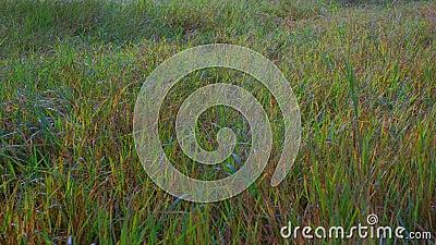 Vista de campo em cores do outono num dia nublado Início do outono filme