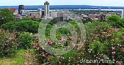 Vista de Hamilton, Canadá, centro de ciudad con las flores en el primero plano 4K almacen de video