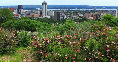 Vista de Hamilton, Canadá, centro da cidade com as flores no primeiro plano 4K video estoque
