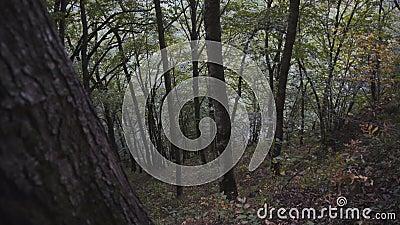 Vista del denso bosque almacen de video