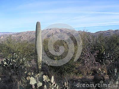 Vista del deserto