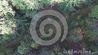 Vista del fuco della pista di sporcizia video d archivio