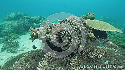 Vista del mondo sottomarino dei coralli e scuola di pesci in un santuario marino archivi video