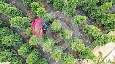 Vista desde el dron - vendedora caucásica de plantas camina por el vivero de los semilleros y habla vía almacen de video