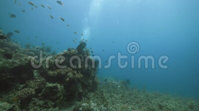 Vista submarina: Un buceo nadando en la barrera de coral con muchos peces y plantas acuáticas almacen de video