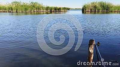 Viste delle canne del fiume archivi video