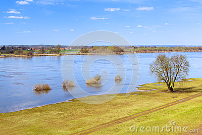 Vistula river scenery with single tree