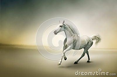 Vit häst i rörelse
