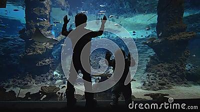 Vita marina, i bambini curiosi guardano i pesci nuotare in grande acquario archivi video
