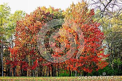 Vivid Autumn Color