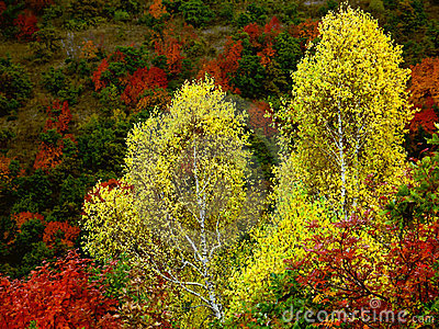 Vivid autumn colors