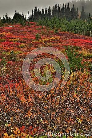 Vivid colors of autumn