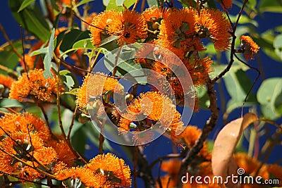Vivid colours,Australian plant