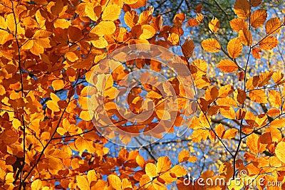 Vivid fall trees